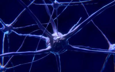 Cellules souches et endométriose, une possible explication de l'étiologie de la maladie